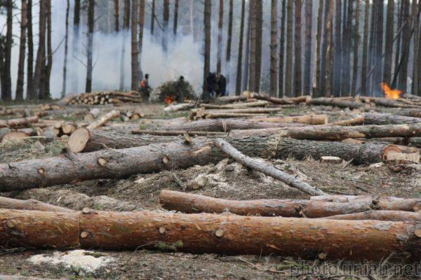 Україна втратила понад мільярд гривень через незаконні вирубки лісів та видобування бурштину