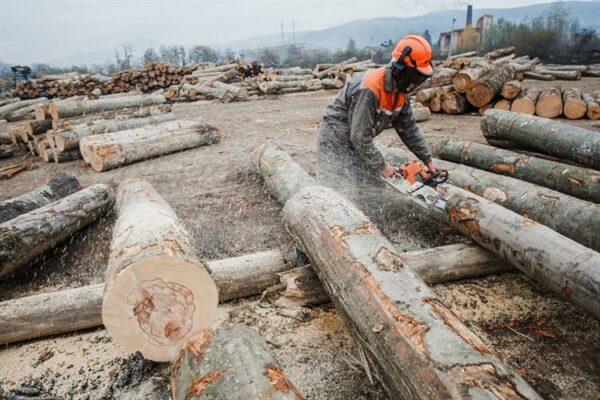 У розслідуванні про незаконну вирубку карпатського лісу фігурує компанія «ВГСМ»: що про неї відомо